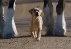 Bild zu Budweiser Video Puppy Love