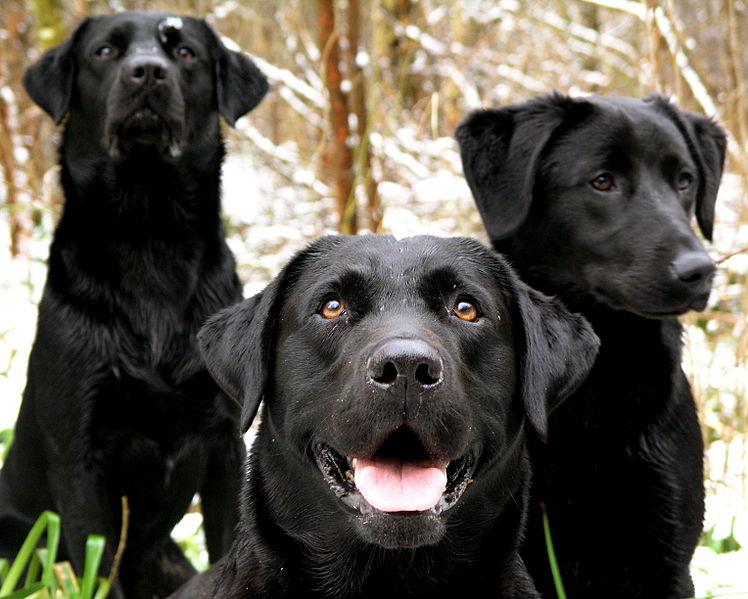 blutgerinnungsstörung beim hund