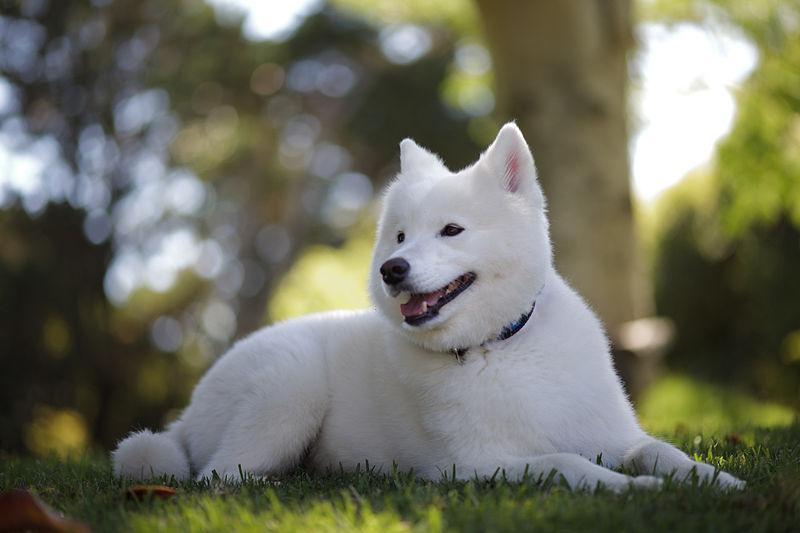 dooggs hunde wunschhund suchen und finden