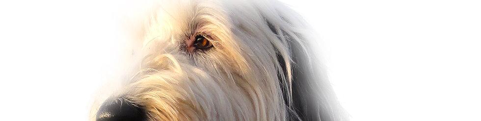 unterzucker symptome bei hunden